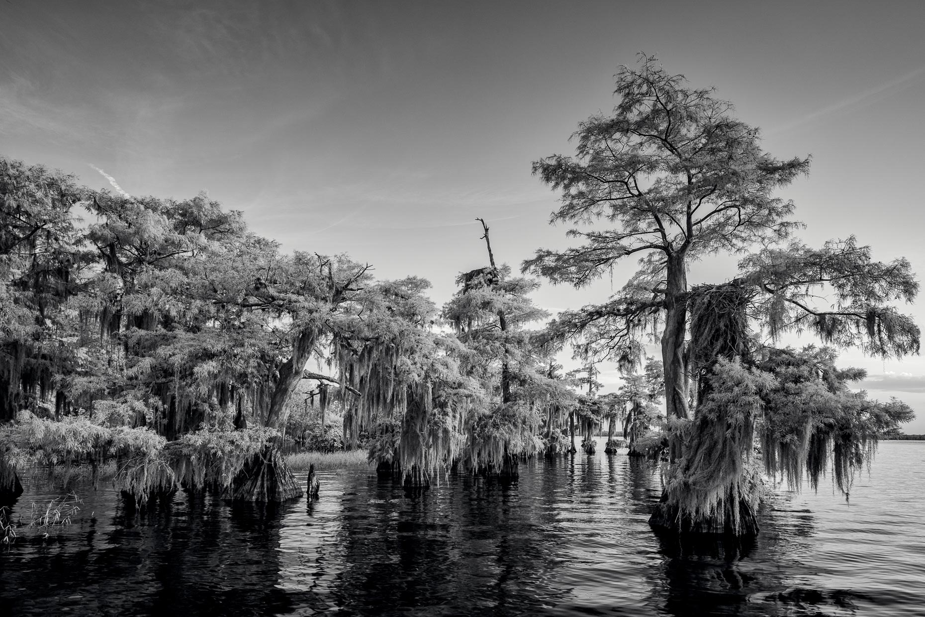 20160804_blue_cypress_lake_0013